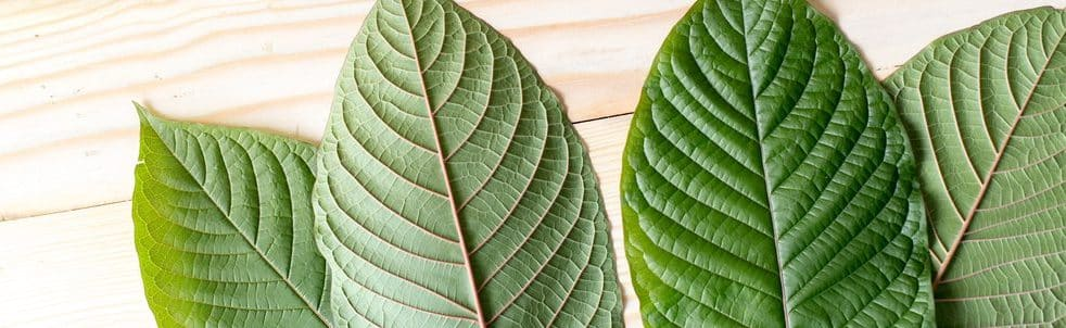 "The Places Where You Can Ask: ""Is Kratom Legal or Not?"""