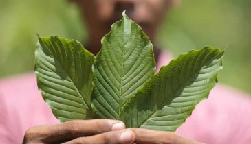 Kratom Review: Must-Know Information about the White Vein Maeng Da