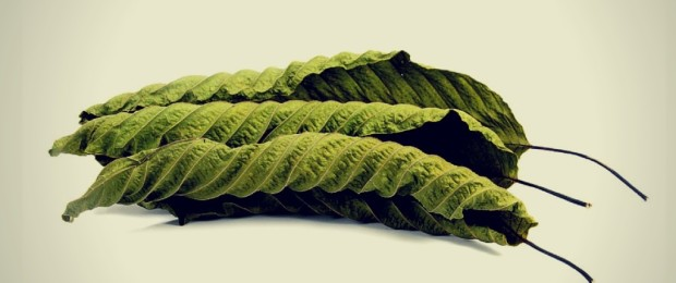 Why Is Smoking Kratom Not a Recommended Way to Take Kratom? 1