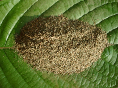 Knowing the Different Places Where Can You Buy Kratom