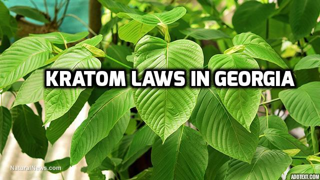 What is the Truth About the Legality of Kratom in Georgia?